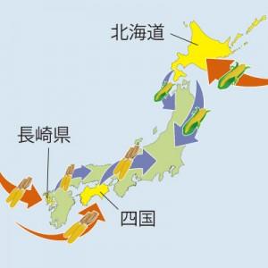 長崎または四国にフリントコーンが、北海道にはスイートコーンが伝わり日本全土でのとうもろこし栽培が始まりました